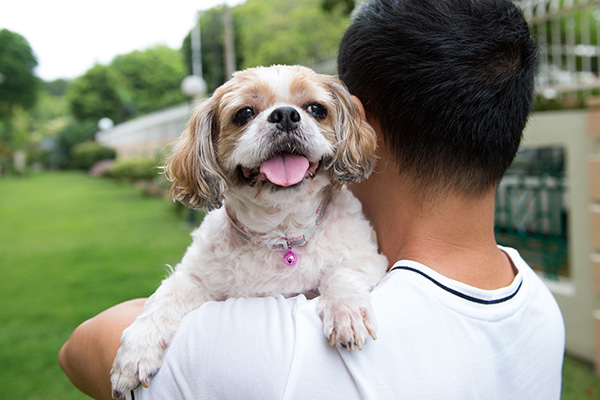 asian-young-man-with-his-shih-tze-dog-9B4NZHE.jpg